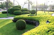 城市园林绿化工程-----为生态家园扮绿,为美丽中国添彩