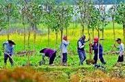 苗木苗圃种植-----万亩自有苗圃基地,苗木种类多样化